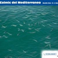 II Copa Colmic del Mediterraneo