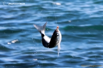 lances pescacorcheo 17