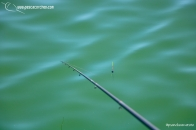 Andaluz 1 pescacorcheo - 5