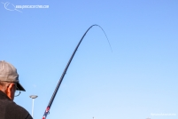Andaluz 1 pescacorcheo - 70